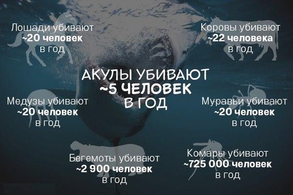 Акулы убивают в год